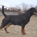 Black-Rott Gino 21 months
