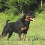 Black-Rott Gino 15 months