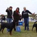 Komarom 16.10.2010 Black Rott Franco BJ, Black Rott Erik BOB