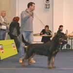 Black-Rott Gino IHA Graz 2012