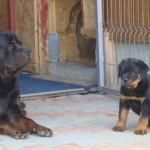 Baloo & Gino