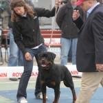 Black-Rott Franco CACIB Slobozia 02.04.11