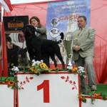 Black-Rott Franco Suprem BIS 2XCACIB Arad 2011 (1)