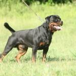 Black-Rott Franco 18 months