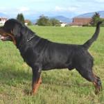 BlackRott-Hungary-Jago-3-years