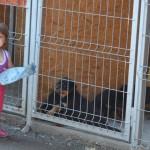 Black Rott Puppies & Sara