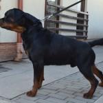 Black-Rott Hungary Jago 26.02