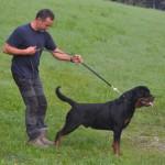 Black Rott Hungary Jago 2013
