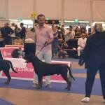 European Dog Show 2013